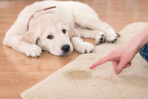 Puppy Potty Training | Behavioral Issues | Michaels Pack