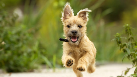 Dog Trainer Near Me – Why It's Important to Work with a Local Dog Trainer | Michaels Pack | Professional Dog Training Services